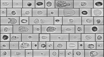 Representative microscopic images of different cells obtained with RAPID